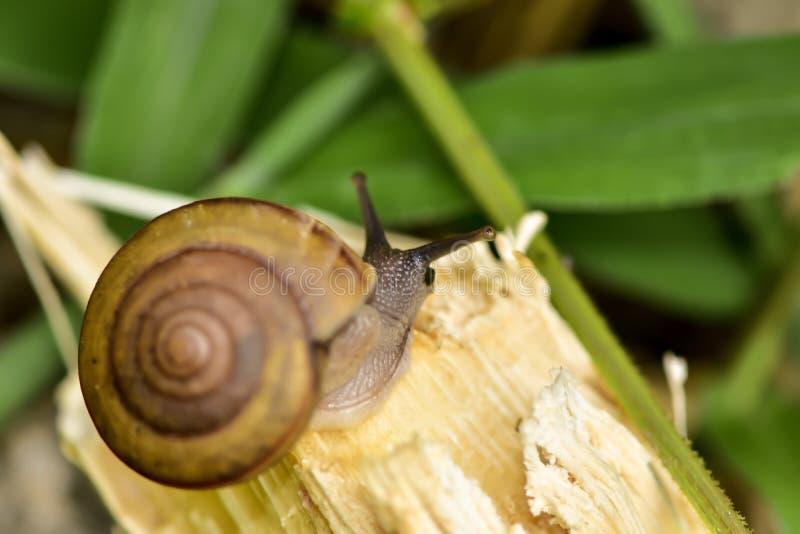 gastropode stockfotografie