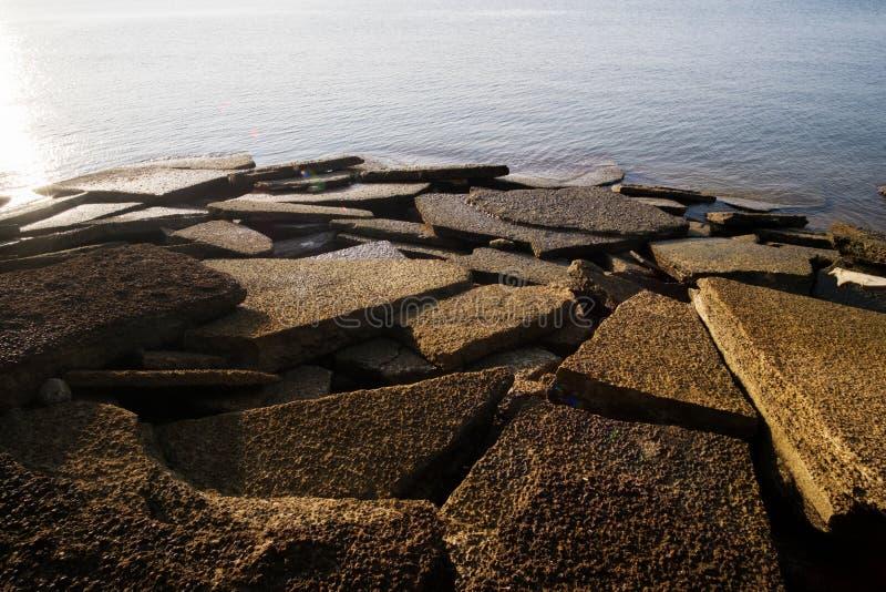 Gastropode-Fossil Shell Beach lizenzfreie stockfotografie