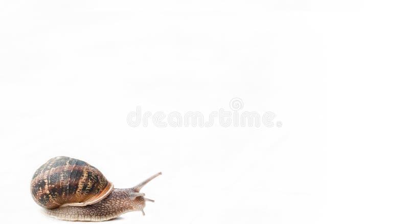 Gastropode lokalisiert stockfoto