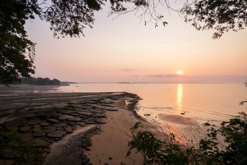 Gastropode versteinerte Shell Beach, 75 Millionen alte Oberteil-Kirchhof der Jahre stockfotografie