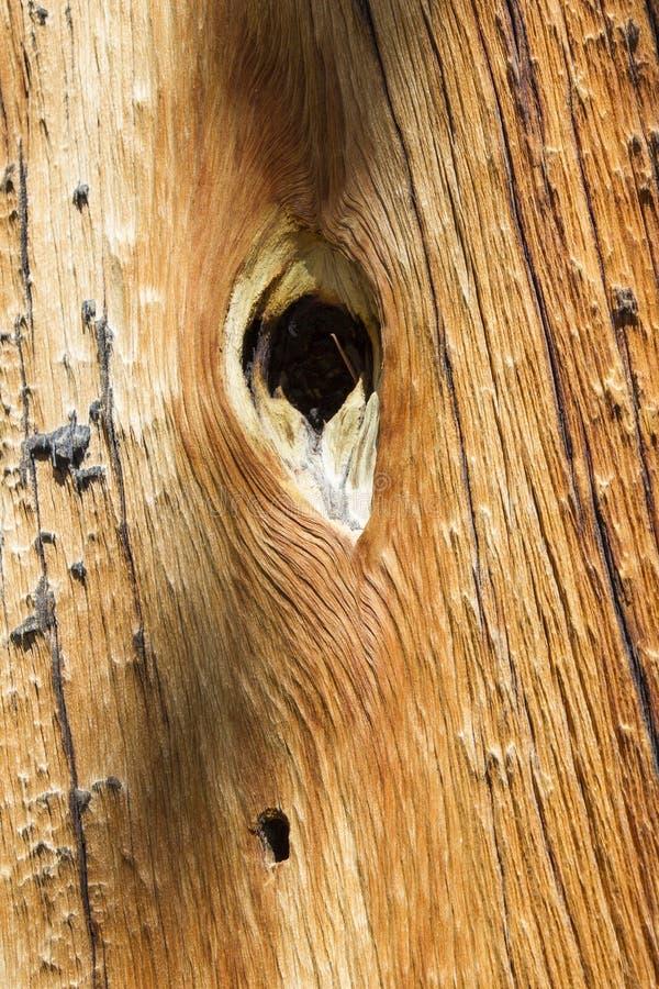 Gat in hout stock foto's
