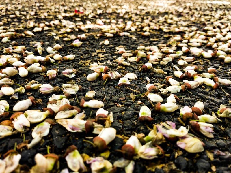 Gata Autumn Flowers arkivfoto