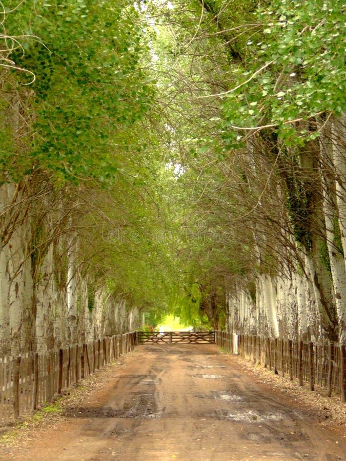 Gata med träd royaltyfria bilder
