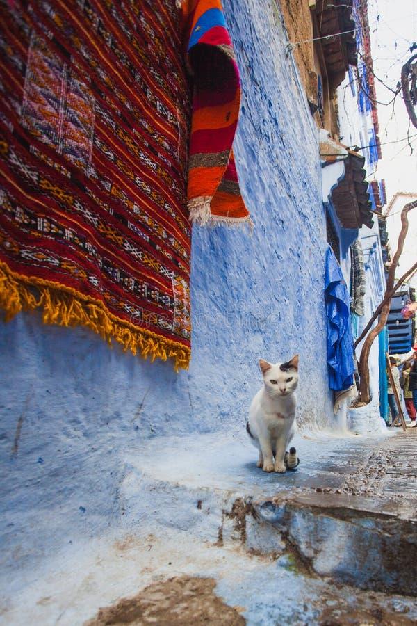 Gatakatt i Marocko royaltyfri bild
