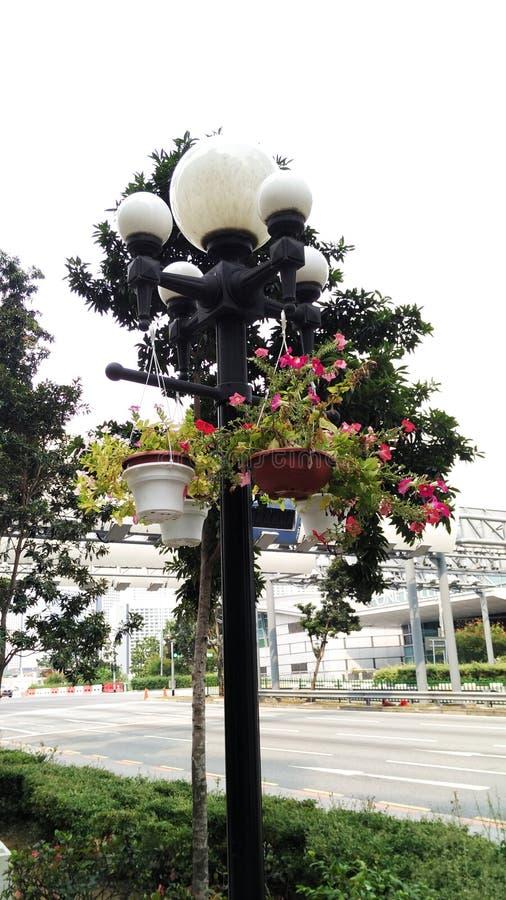 Gatalampa med blomkrukor royaltyfri bild