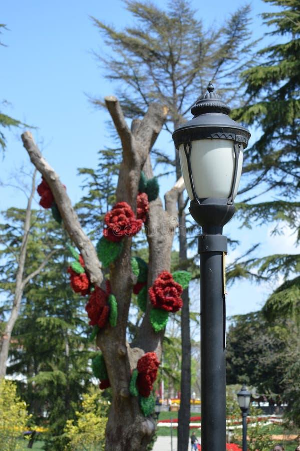 Gatalampa och intressera mycket det dekorerade trädet royaltyfri bild
