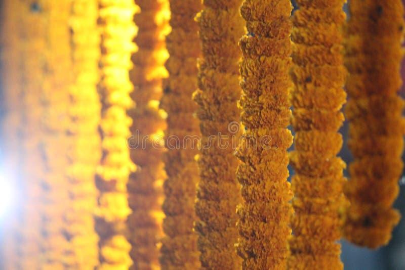 GataMerigold mjöl shoppar i västra Bengal royaltyfri bild