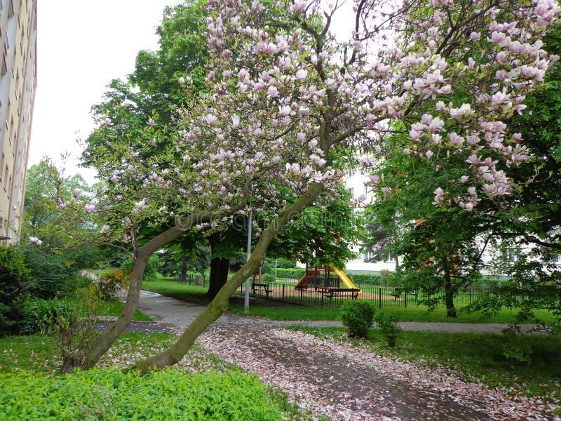 Gataprague för körsbärsröda blomningar Tjeckien royaltyfri foto