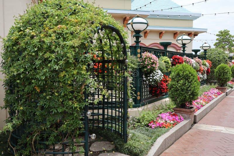Gatavägg med färgrika blommor royaltyfria bilder