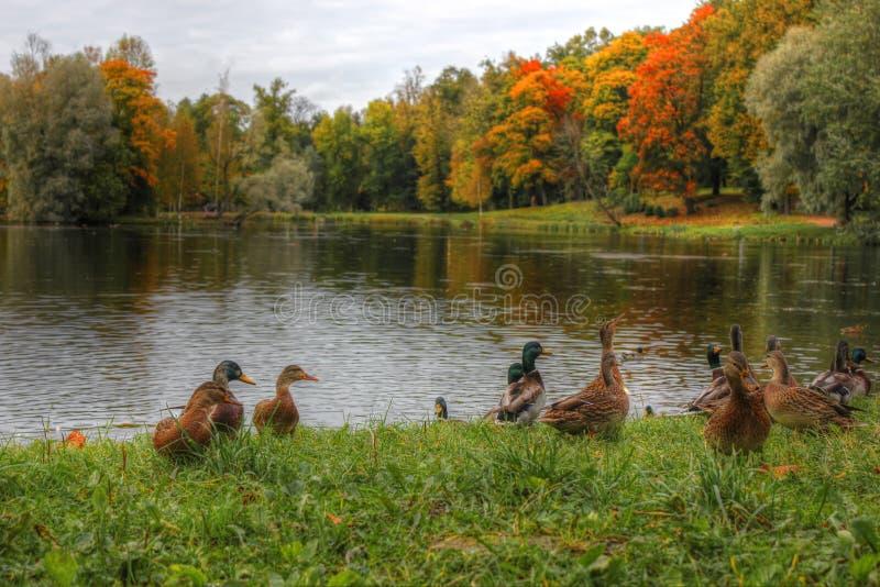 Gatchina Park, St. Petersburg stock photo