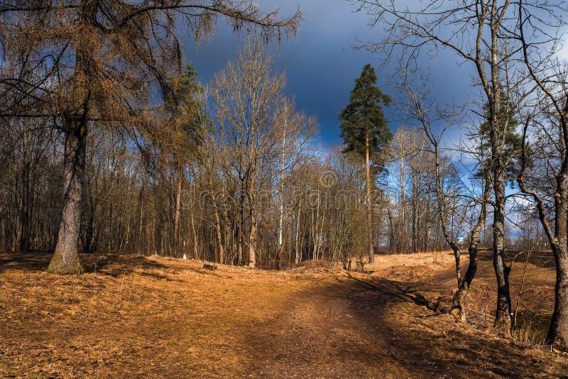 Gatcina Primavera 2017 Paesaggio della primavera al parco del priore ad aprile fotografia stock