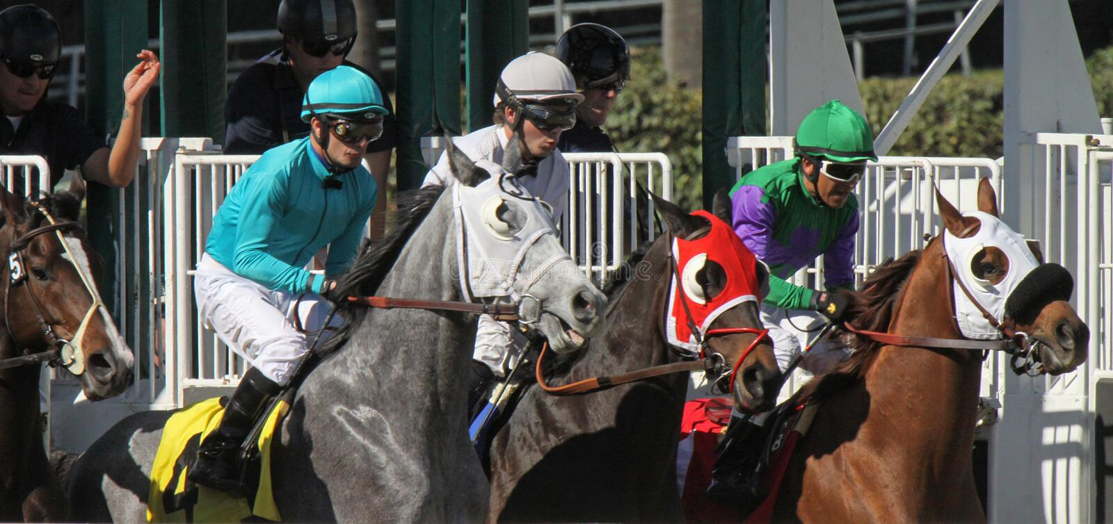 Download Gate Break for a Turf Race editorial photo. Image of rider - 29309996