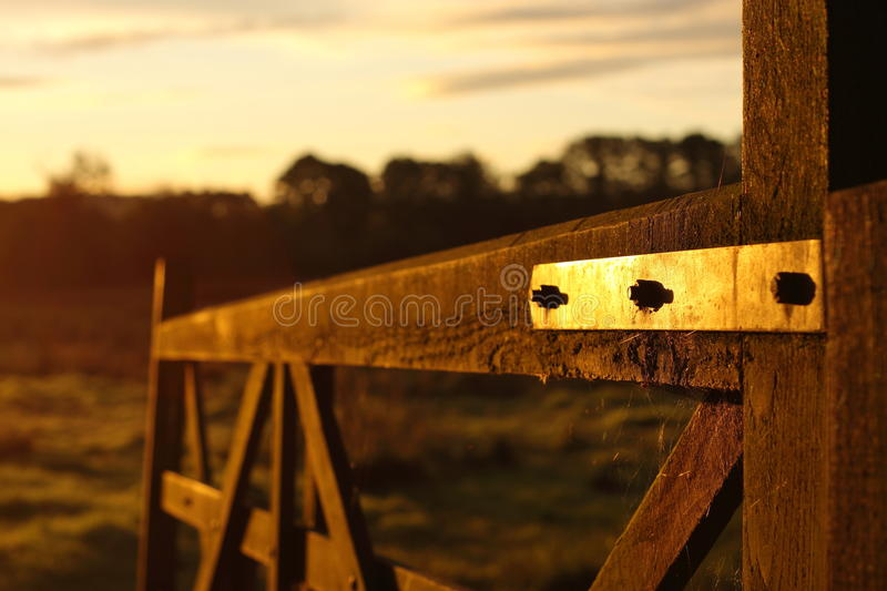 Download Gate at sunrise stock photo. Image of sunlight, tree - 16637674