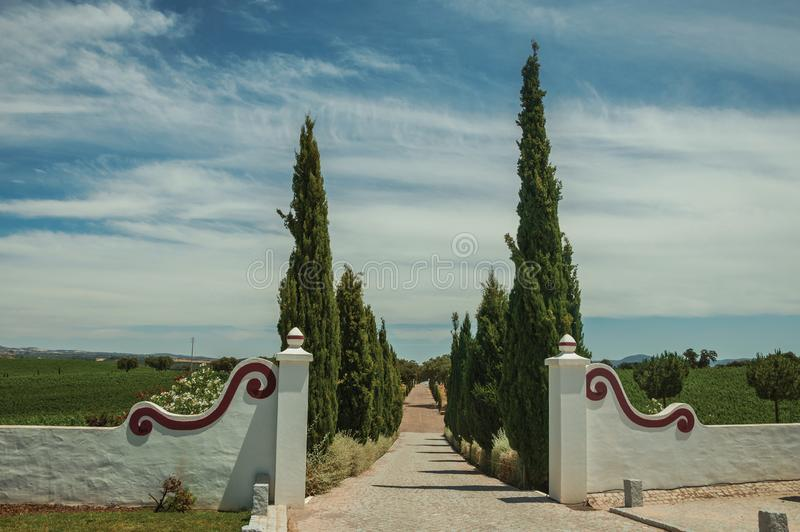 Gateway and path with poplars in a vineyard. Charming decorated gateway and wall made in masonry with path encircled by poplars, in vineyard near Estremoz. A stock photography