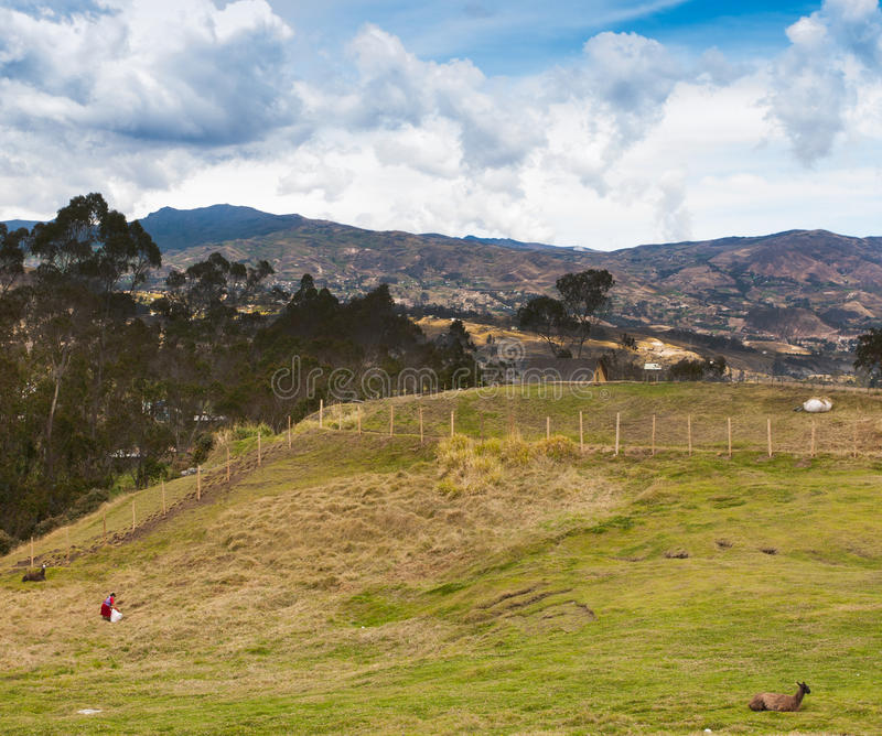 Download Gathering Grasses At Ingapirca, Ecuador Stock Image - Image: 28400855