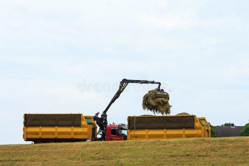 Gathering hay at dutch dikes, Duurse Waarden royalty free stock photos