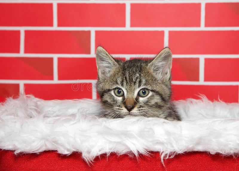 Gatinho adorável do gato malhado que repica fora de uma cesta do Natal imagem de stock