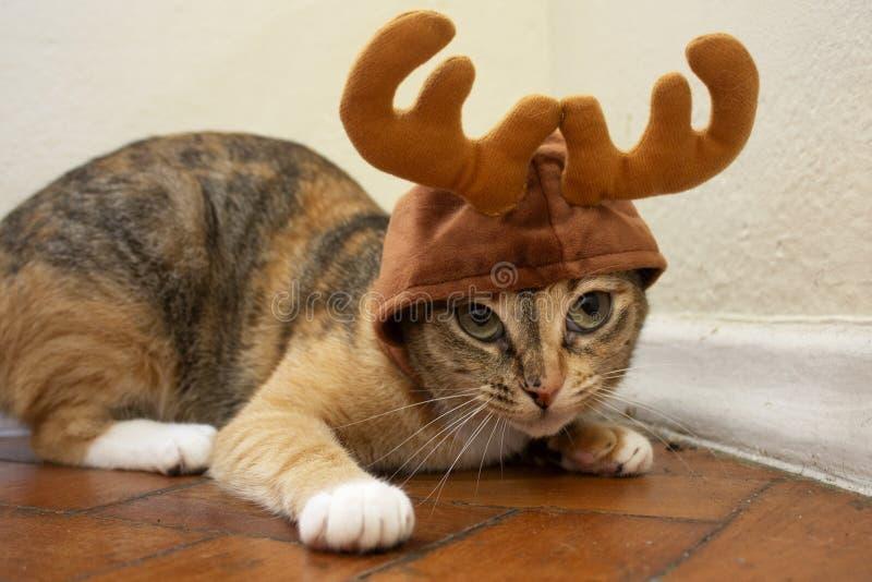 Gatinho adorável do gato malhado do shorthair que veste um chapéu da rena do Natal Gato bonito fotografia de stock royalty free