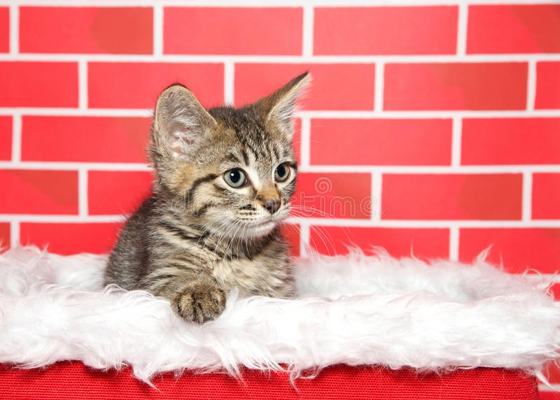 Gatinho adorável que senta-se em uma cesta do Natal, pata do gato malhado na borda foto de stock