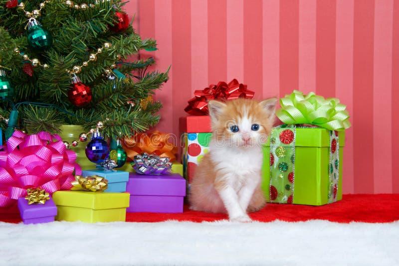Gatinho alaranjado do gato malhado pela árvore de Natal imagem de stock