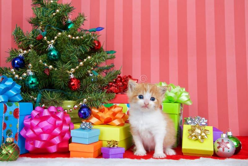 Gatinho alaranjado e branco do gato malhado pela árvore de Natal fotos de stock royalty free