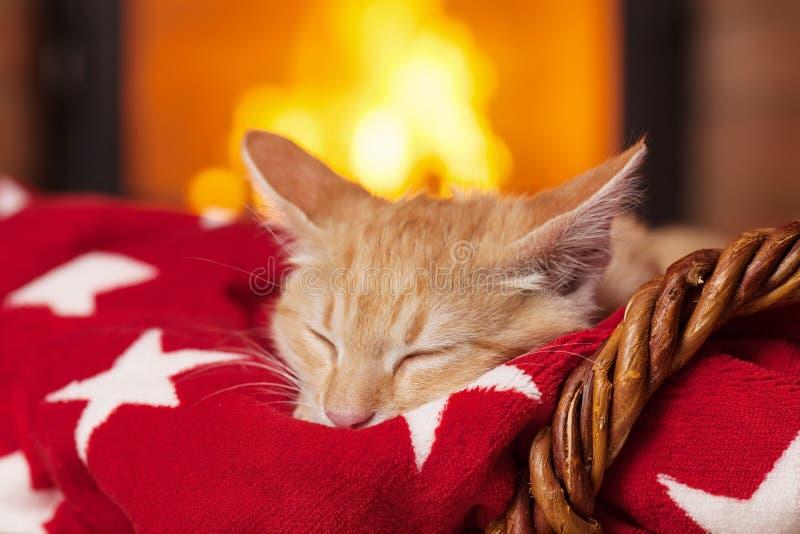Gatinho alaranjado que dorme na cobertura vermelha na frente da chaminé foto de stock royalty free