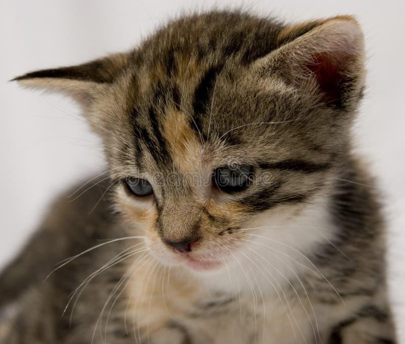 Download Gatinho bonito imagem de stock. Imagem de animal, cuddly - 10059101