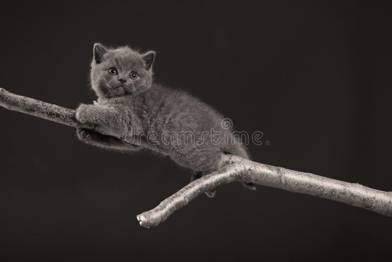 Gatinho bonito acima em um ramo foto de stock