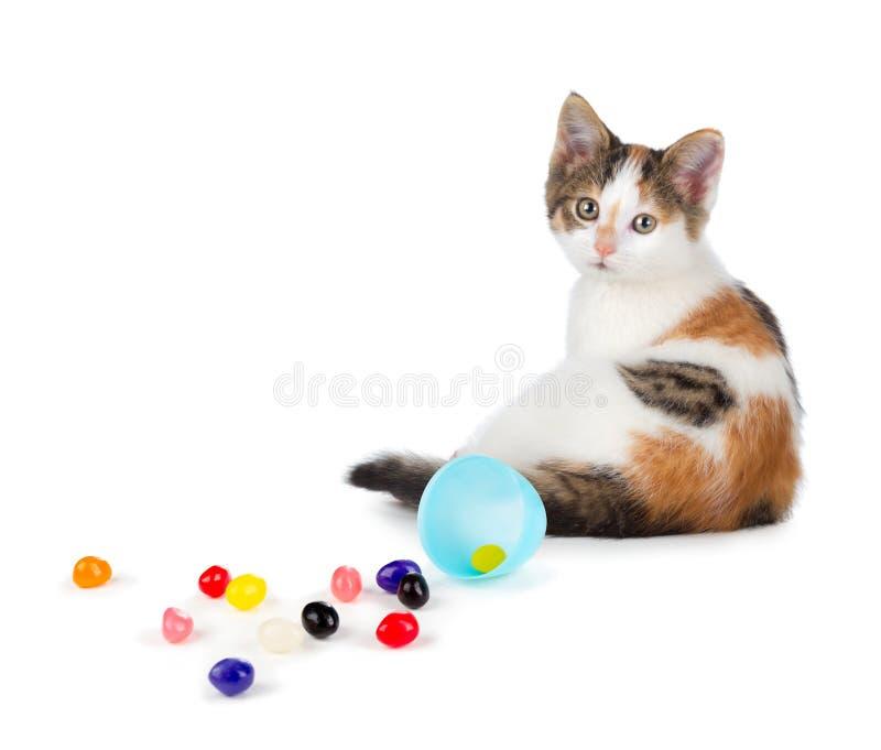 Gatinho bonito da chita que senta-se ao lado dos feijões de geleia derramados em um whit foto de stock