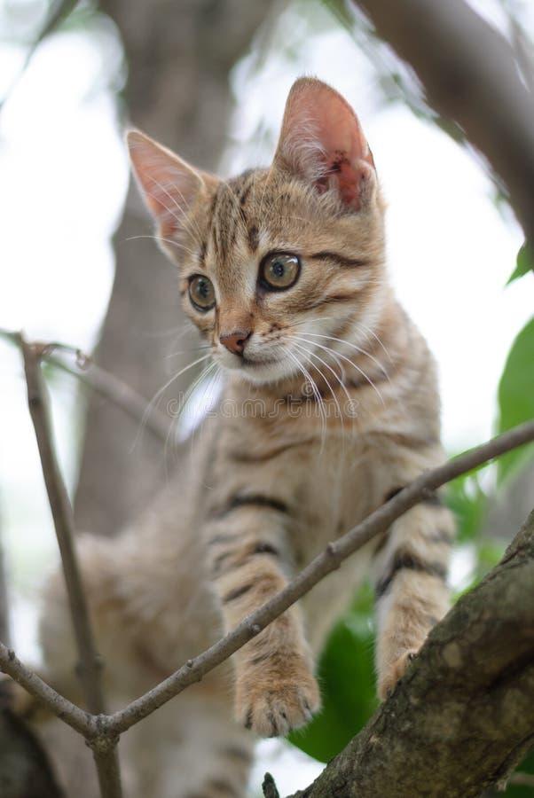 Gatinho bonito do gato malhado em um ramo de árvore foto de stock royalty free