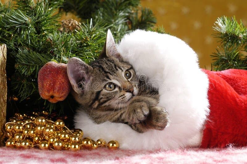 Gatinho bonito do gato malhado em uma bota vermelha de veludo no Natal fotografia de stock