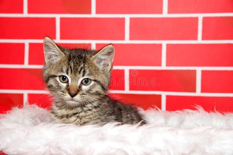 Gatinho bonito do gato malhado que repica fora de uma cesta do Natal imagens de stock