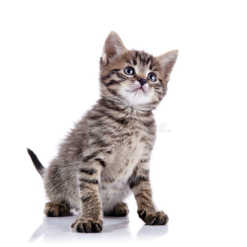 Gatinho bonito listrado foto de stock