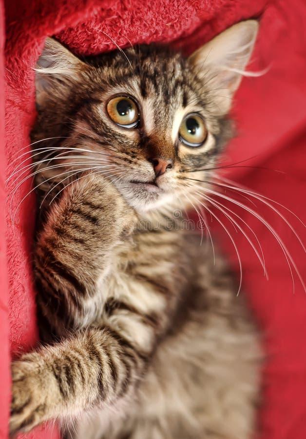 Gatinho bonito macio com um olhar filosófico foto de stock