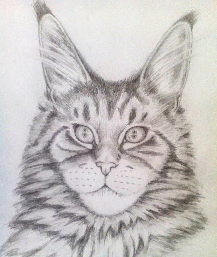 Gatinho bonito Maine Coon, retrato no lápis ilustração do vetor