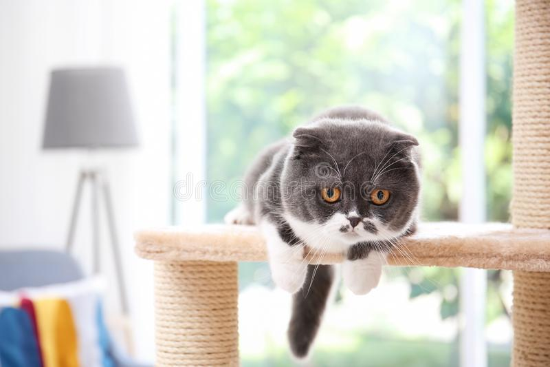 Gatinho bonito na árvore do gato fotografia de stock royalty free