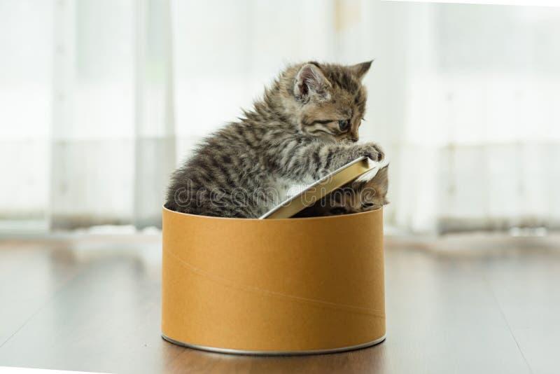 Gatinho bonito na caixa foto de stock