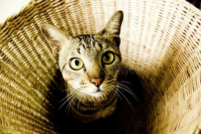 Gatinho bonito na cesta fotografia de stock