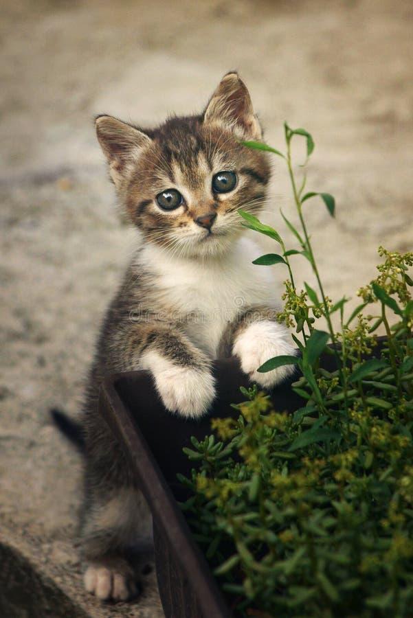 Gatinho bonito na frente das flores fotografia de stock