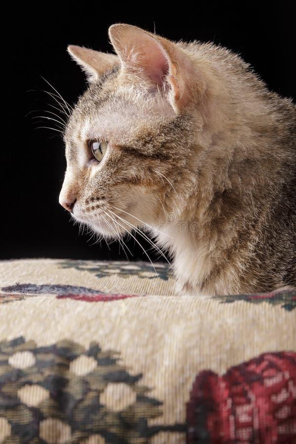 Download Gatinho bonito foto de stock. Imagem de feline, tabby - 29845256