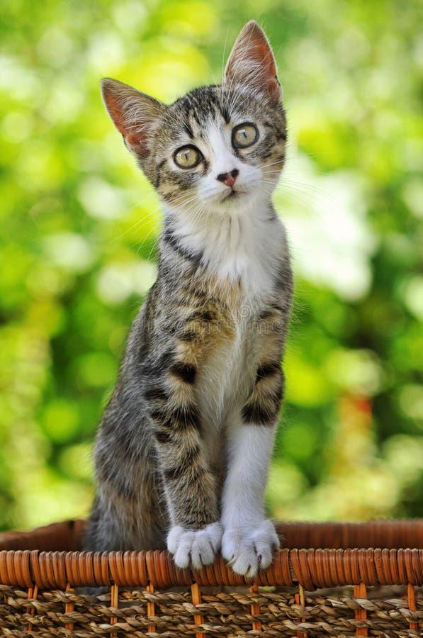 Gatinho bonito que está alto imagem de stock
