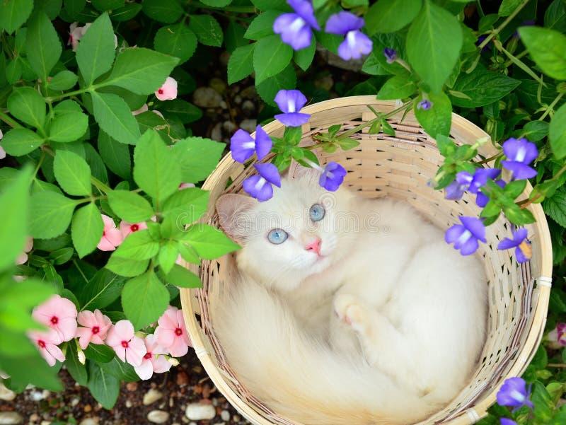 Gatinho branco na cesta fotografia de stock royalty free