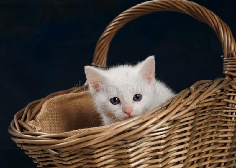 Gatinho branco na cesta de vime fotos de stock