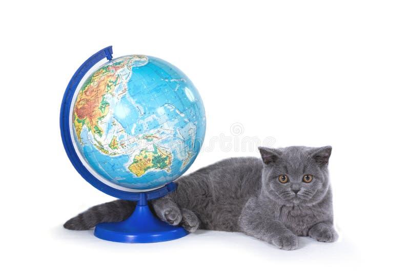 Gatinho britânico que encontra-se ao lado do globo Isolado no fundo branco fotografia de stock royalty free