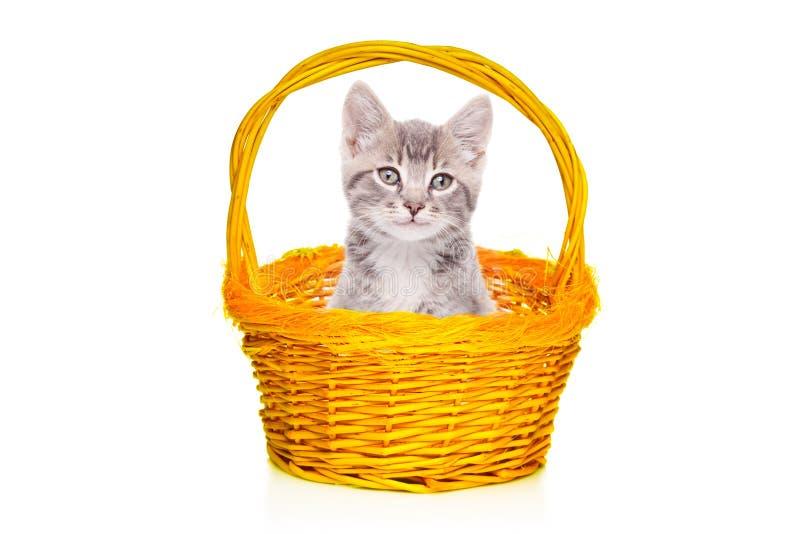 Gatinho cinzento em uma cesta fotografia de stock