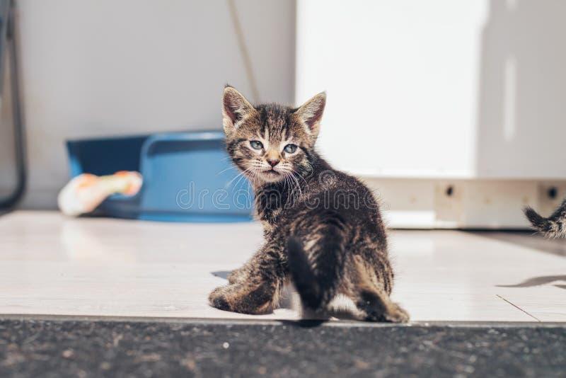 Gatinho cinzento pequeno bonito do gato malhado que olha para trás imagem de stock