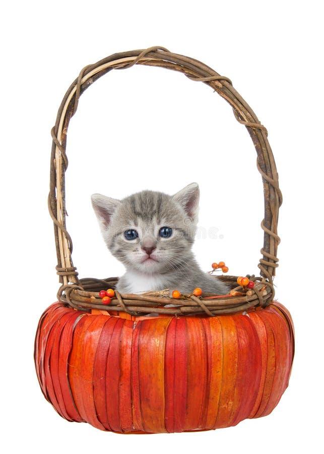 Gatinho cinzento pequeno do gato malhado em uma cesta da abóbora isolada imagem de stock