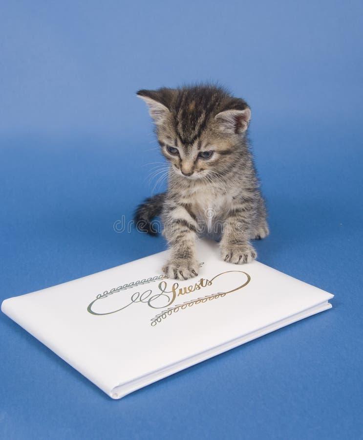Gatinho com livro de convidado foto de stock royalty free
