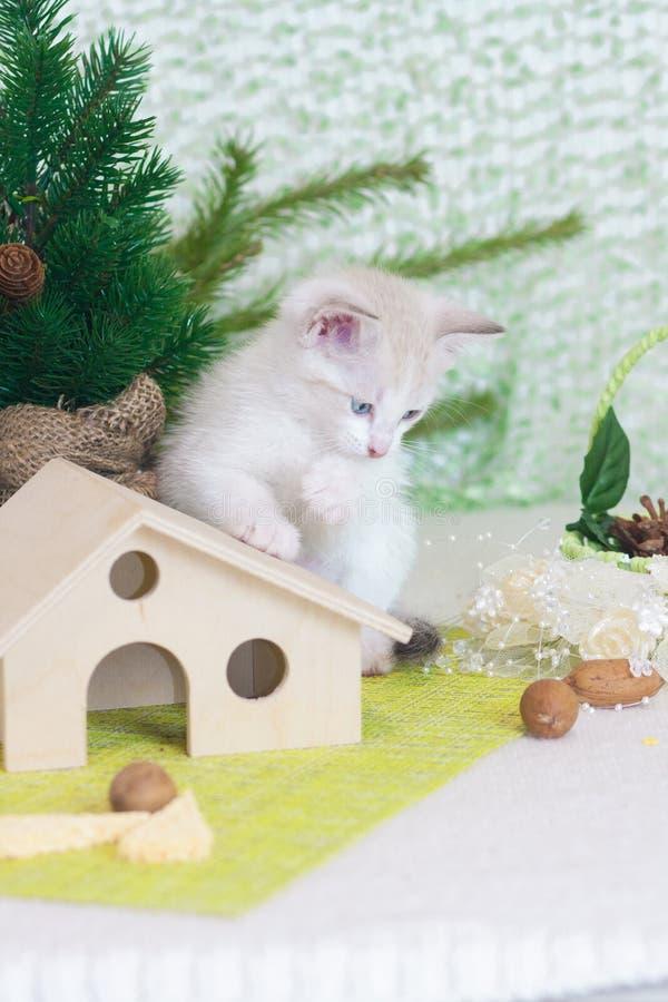 Gatinho do ano novo S?mbolo do gato do ano novo fotografia de stock royalty free