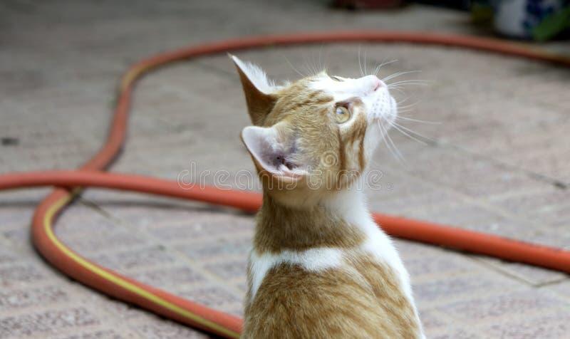 Gatinho do gato malhado fotografia de stock royalty free